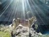 Adiestramiento de perros de búsqueda