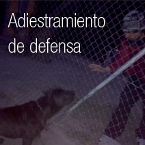 Adiestramiento de defensa